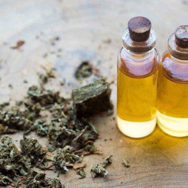 Fiere ed Eventi sulla Cannabis in Europa