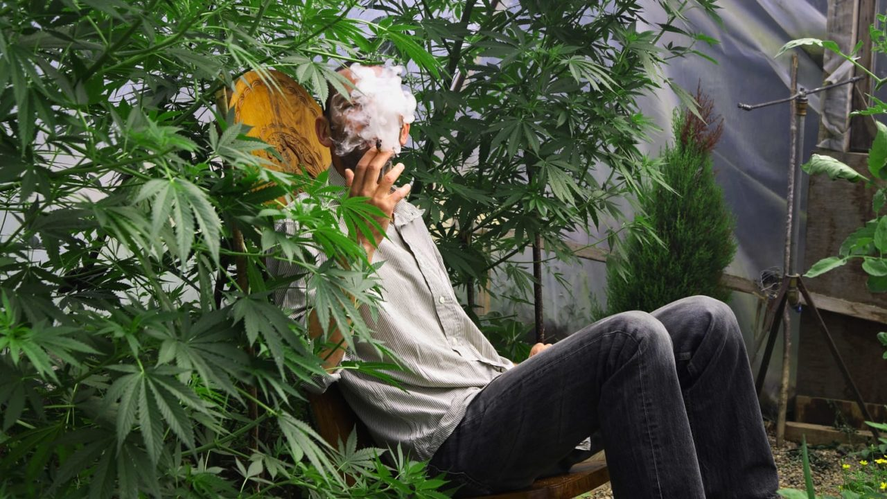 https://keepgrowshop.com/wp-content/uploads/2020/04/140131-homegrown-marijuana-dickson-tease_blm7w3-1280x720.jpg